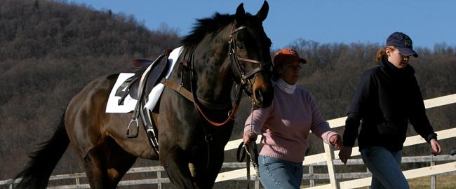 Jaki koń jest, każda widzi