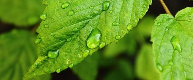 Woda letnią porą – czyli lekcje z dietetykiem dziecięcym