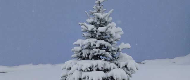 Choinka- drzewko świętami pachnące