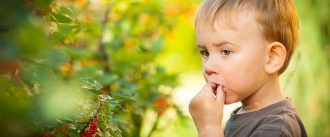 10 sposobów jak zachęcić dziecko do jedzenia warzyw i owoców