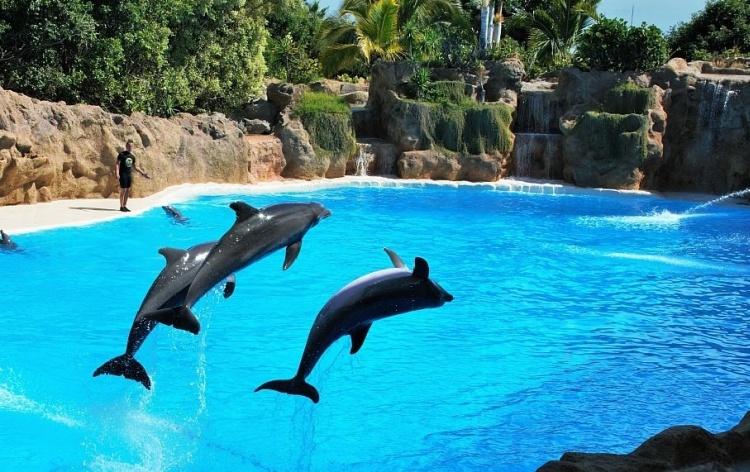 delfiny1