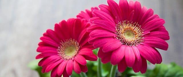 10 roślin, które według NASA usuną toksyny z twojego mieszkania