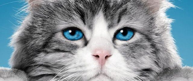 Jak zostać kotem – czy iść z dzieckiem do kina?