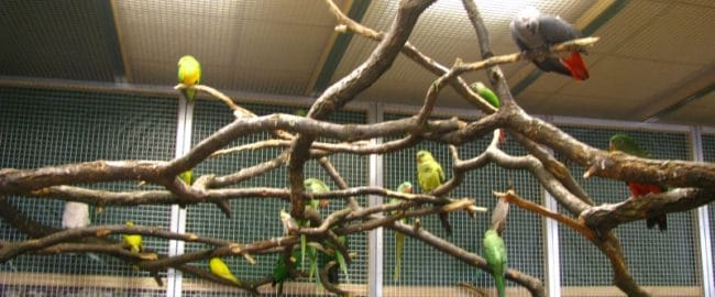 Papugarnia Carmen, czyli ptaki w zasięgu ręki
