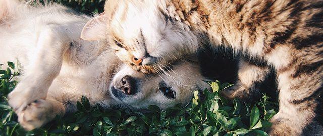 Kupię dzieciom psa albo kota, będą miały świetną zabaw (k)ę!