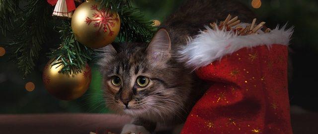 Dlaczego warto z wyprzedzeniem kupować prezenty świąteczne? Ja wiem!