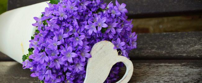 Kwiaty doniczkowe, które zwiastują wiosnę i zdobią dom