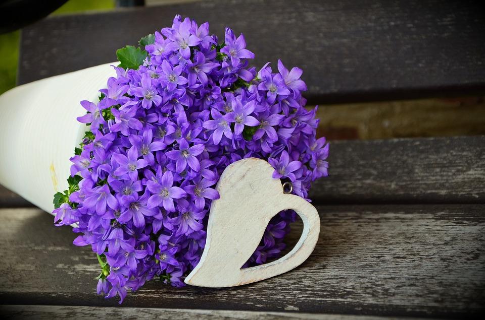 Kwiaty Doniczkowe Które Zwiastują Wiosnę I Zdobią Dom W Roli Mamy