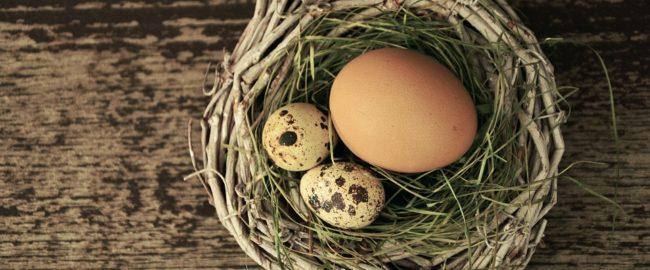Jak sprawdzić świeżość jajka oraz jak je przechowywać?