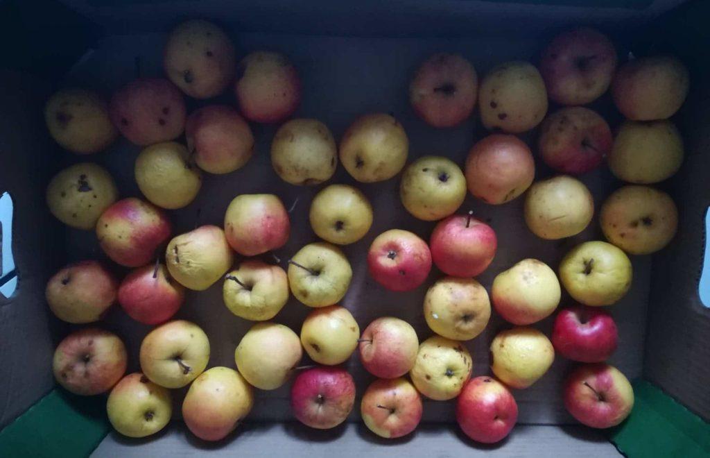 naleśniki z jabłkami z przepisu babci