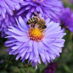 Pszczoły - zabijając jedno stworzenie, zabijasz całą przyrodę