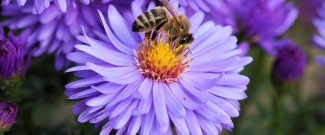 Pszczoły – zabijając jedno stworzenie, zabijasz całą przyrodę