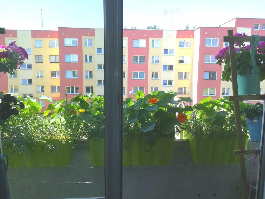 kwiaty na małym balkonie
