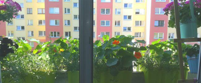 Kwiaty na małym balkonie. To nie takie trudne