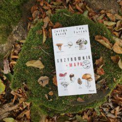 Grzybownik – atlas grzybów, który warto mieć pod ręką