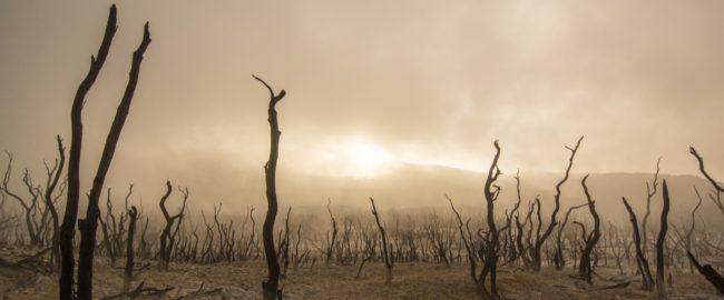 Katastrofa ekologiczna? Unikniemy jej, gdy przestaniemy stawiać na wygodę