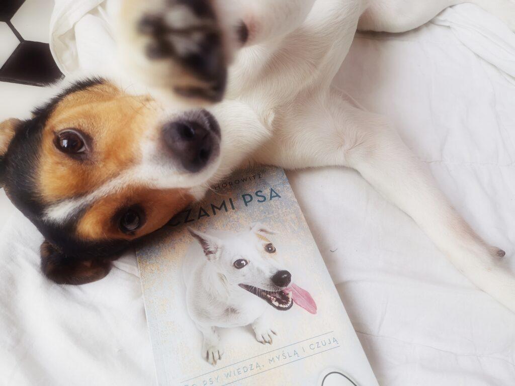oczami psa