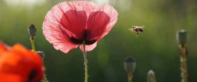 Jak radzić sobie z ukąszeniami owadów i pajęczaków